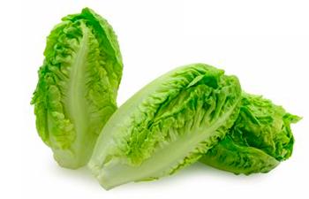 Lechuga Little Gem - Lettuce - Natural Salads