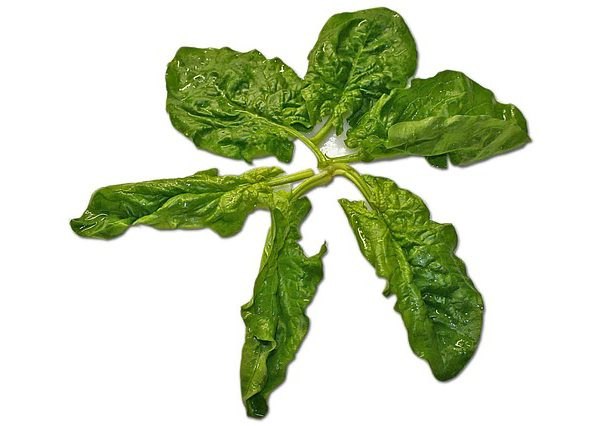 Espinacas - Spinach - Natural Salads